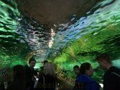 Akvariumas jūrų muziejuje