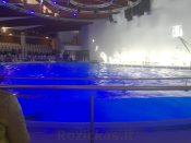 Delfinariumas Klaipėdoje