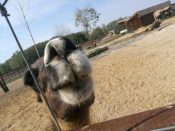 Zooligijos sodas
